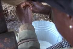 mukifarmer_milking